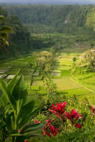 Featured Gallery - Bali