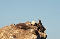 CA sea lions. Photo by Beth Huning.
